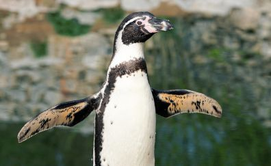 Penguin, water bird, animal