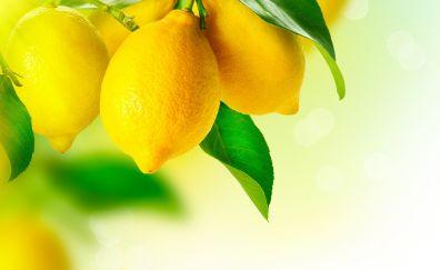 Lemon fruits on branch