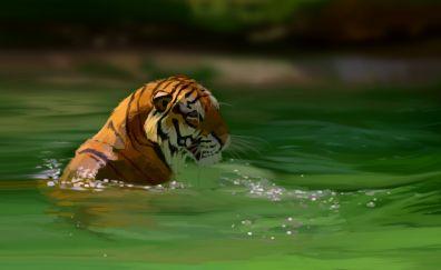 Tiger, bath, green lake, art
