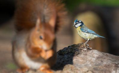 Blue tit, bird, Blue tit, blur
