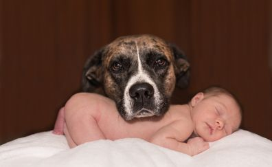 Dog, baby sleeping, animal