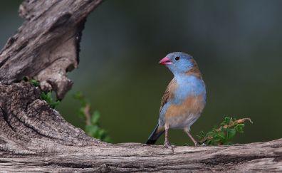 Cute small bird, finch