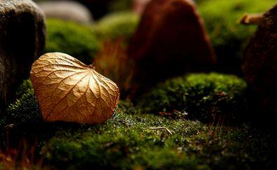 Dry leaf, moss, close up