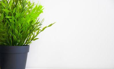 Indoor, green plants, pot