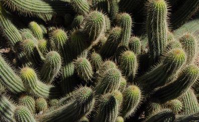 Cactus plants spines