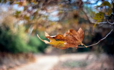 Leaf on branch of tree in fall