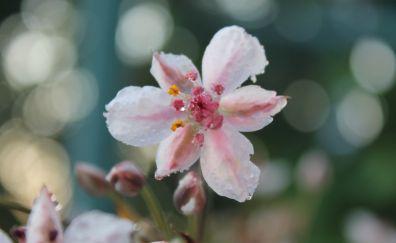 Herbarium, pink flower, bokeh