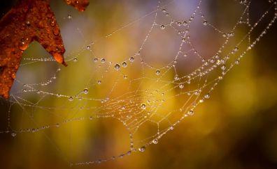 Leaf, spider web, drops, blur
