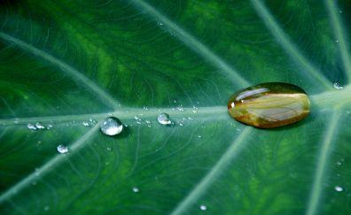 Drops on green leaf, veins