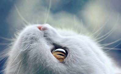 White cat eyes, muzzle, close up