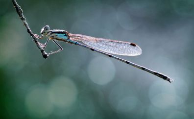 Dragonfly, close up, blur
