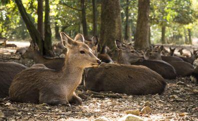 Deer herds