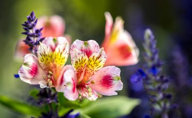 Small colorful flowers