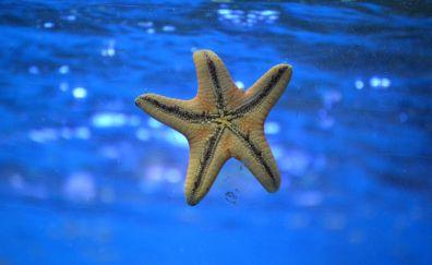 Starfish, underwater, swim