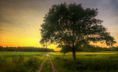 Tree, landscape, dirt road, nature