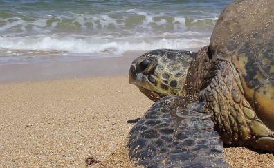 Turtle muzzle, beach