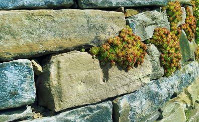 Stone wall, fouling, wall plants
