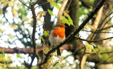 Cute small bird