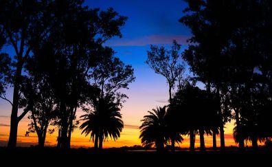 Lagoon palm trees landscape sunset