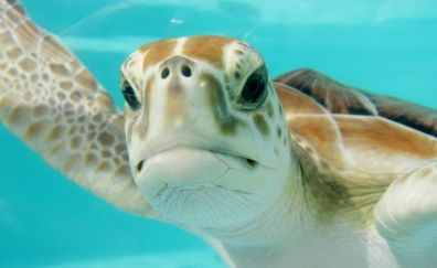 Turtle muzzle, underwater