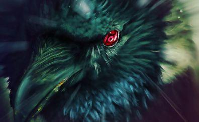 Naruto shippuden, crow, raven, birds