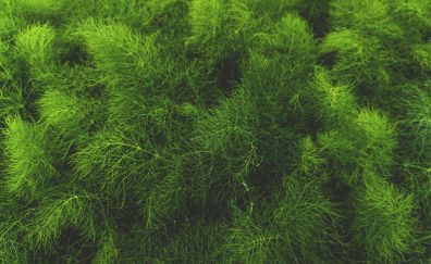 Grass and green plant