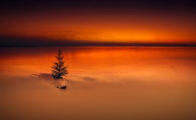 Lonely tree, sunset, horizon, nature