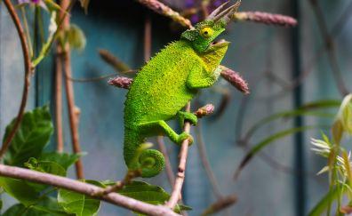 Green Horned Lizard, Lizards