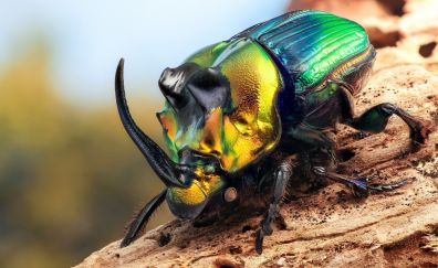 Colorful beetles insect