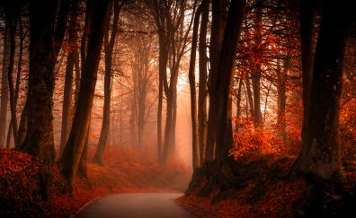 Red forest in Autumn
