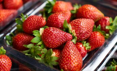 Strawberry, red fruits, berries