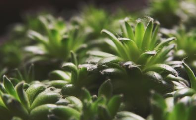 Succulents, plants, leaves