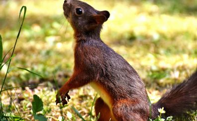 Squirrel, rodent, looking up, playful