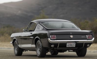 Black ford mustang shelby car