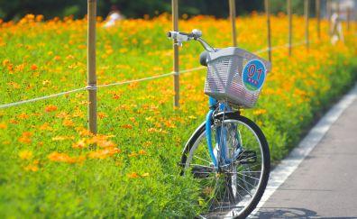 Bicycle flowers field