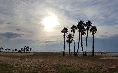 Coma ruga spain beach palm trees