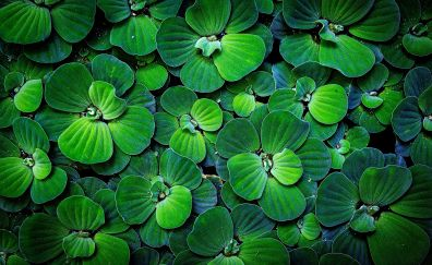 Green leaves, pond