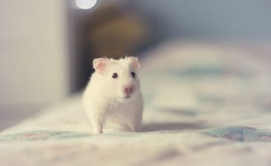 Cute hamster rodent animal