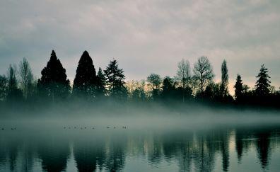 Tree, lake, evening, fog, mist, reflections, nature