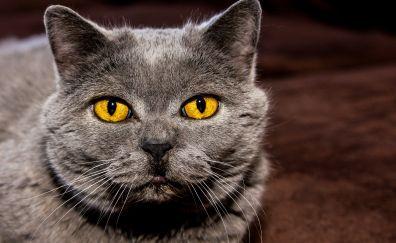 Cat eyes, yellow black, scary