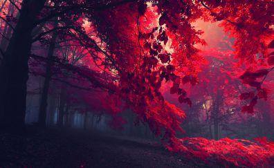 Red forest landscape