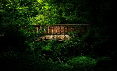 Beautiful bridge in forest