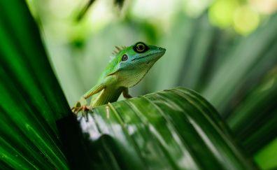 Lizard on leaf wallpaper