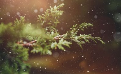 Snowflakes over the pine tree branch