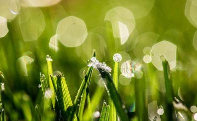 Bokeh, morning, green grass, drops