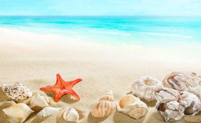 Horizon, beach, sand, shell, starfish, 4k