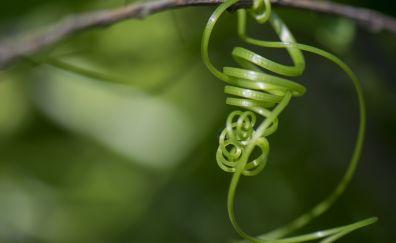 Vine of plant