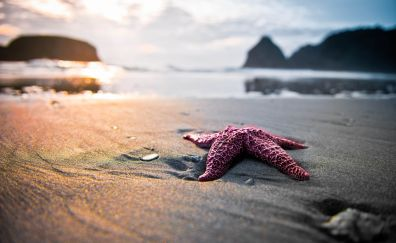Star fish at beach blurred