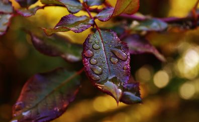 Dew drops on beautiful Leaves, close up