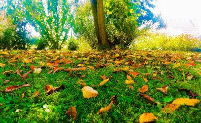 Autumn, leaves, fall, grass field